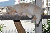 May's Slippin' Into June ... (I Flickr 4 JOY) Tags: cats cat sleep sole squamish pest cattree baywindow soundasleep summerweather pinkpads thepest champagneandwhite fastaslelep