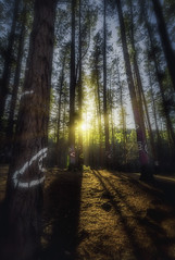 Barely There (whitelfc) Tags: trees sunset nature forest landscape spain exposure bilbao oma hdr blending