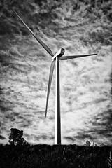 Gigante del viento. (Alberto E.B.) Tags: bw white black blanco monocromo y negro bn turbina generador eolico
