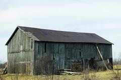 Propped Up (gabi-h) Tags: blue ontario yellow barn rural vintage farm rustic oldfashioned wirefence proppedup princeedwardcounty drygrass gabih