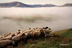 (claudiophoto) Tags: italy misty fog montagne umbria sibillini parconazionale montisibillini landscapemountains castellucciodinorcia piangrande sibillininationalpark paesaggiumbri regioneumbra montidellemarche