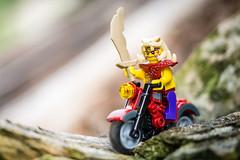 Ready to plunder (Reiterlied) Tags: macro bike lens toy photography prime nikon lego sigma minifig dslr minifigure 105mm zugu d5200 legography ninjago stuckinplastic reiterlied