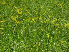 Flowers (escailler arthur) Tags: summer paris france photo view franais parisien