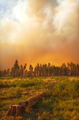 DSC_0660 fire hdr 850 (guine) Tags: grandcanyon grandcanyonnationalpark canyon northrim fire smoke fullerfire trees plants hdr qtpfsgui luminance