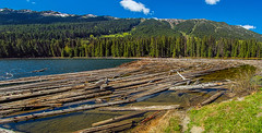 logjam on duffey lake - BC, canada (Russell Scott Images) Tags: canadianrockymountains britishcolumbia canada bc duffey lake