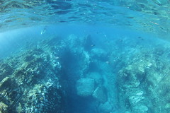Snorkelling off Raoul Island (cathm2) Tags: newzealandkermadecs raoul island snorkelling underwater blue travel water