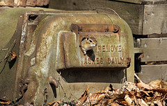 ... AND CRITTERS ONCE A WEEK (Doris Burfind) Tags: animals sign spring woods rust wildlife letters machine chipmunk
