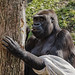 recognize yourself - zoo animals VIII