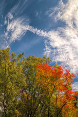 Autumn Foliage (dan_walk) Tags: travel blue autumn light sky orange sun color colour tree green beautiful leaves japan clouds high kyoto colorful day dynamic sunny colourful range hdr