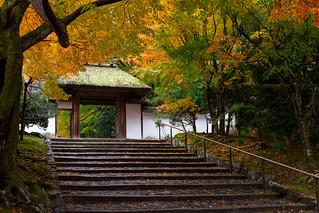 紅葉 - 安楽寺 / Anraku-ji Temple