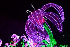 Chinese Lantern Flower (heathernewman) Tags: flower colour longleat chineselantern