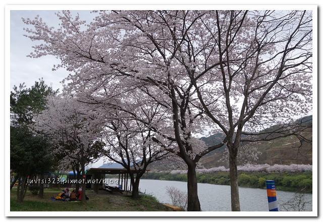 화개십리벚꽃길04