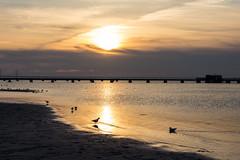 Ribersborg Beach (Hkan Dahlstrm) Tags: sunset sea sky orange beach photography se skne sweden f56 uncropped malm resund ribban ribersborg 2015 skneln fridhem canoneos100d sek ribersborgsstranden efs1855mmf3556isstm 5218032015174338