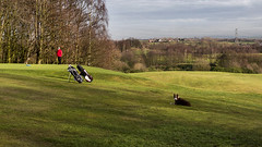 Guardian of the Greens (Jay-Aitch) Tags: dog green club golf manchester guard course putt