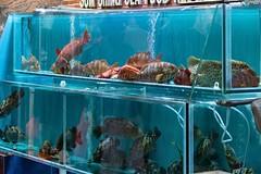 Lau Fau Shan Seafood 2 (l plater) Tags: china hongkong newterritories laufaushan