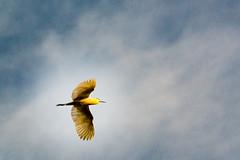 Amazon rain forest Peru (arthur.harrow) Tags: amazonbasin riomadrededios puertomoldonado rainforest bird haciendaconception southamerica peru inkaterra