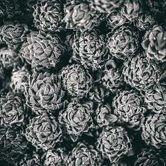 Temptation (Thomas Hawk) Tags: california cactus usa america losangeles sanmarino unitedstates huntington unitedstatesofamerica southerncalifornia botanicalgarden desertgarden fav10 fav25 thehuntington huntingtonbotanicalgarden