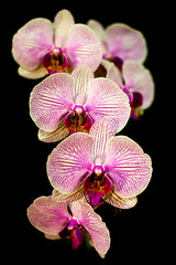 Orchid (Jordan Salkin) Tags: pink plants white newyork black nature lines contrast photography photo cool interesting pretty photographer purple orchids unique patterns awesome like upstate photographic follow rochester explore greenhouse photograph likes photooftheday naturephotography followme 2016 naturephoto naturephotographer amaxing naturephotograph