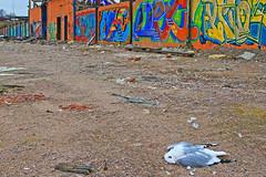 Förgänglighet (Quo Vadis2010) Tags: art tom painting graffiti se ruins paint grafitti message sweden empty konst doodle graffitti expressive scrawl lonely sverige solitary revolt scribble halmstad tegel disrepair klotter halland industri industrialruins unoccupied ödslig måla målning bostäder rivning förfall övergiven bruk kludd väggmålning budskap slottsmöllan abandonedruin tegelbruk spraya meansofexpression affärer självförverkligande enslig övergivenindustri industriiförfall municipalityofhalmstad formerbrickworks youthrevolt halmstadkommun norrainfarten wayofexpressingoneself uttrycksform sättattuttryckasig ungdomsrevolt synliggörande industryindisrepair föredettategelbruk underrivning kommandebostadsbebyggelse spreja konstnärligayttringar slottsmöllansbruk