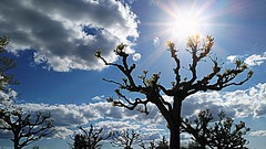 Sunshine (Mystycat =^..^=) Tags: trees sun sunshine clouds soleil arbres smartphone nuages photoshopcs5 alcatelidol3 effethdrpicasa