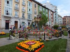 IV Edicin Fiesta de las Flores Burgos 2016 (Lumiago) Tags: espaa flores spain fuente colores burgos castillaylen ivedicinfiestadelasfloresburgos2016