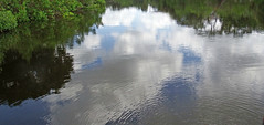 Boating on Smooth Waters Amongst Nature's Reflections (soniaadammurray - SLOWLY TRYING TO CATCH UP) Tags: trees usa nature water creek reflections florida sarasota ripples digitalphotography stillwaters phillippicreek