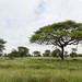 Tarangire National Park, Manyara Region, Tanzania