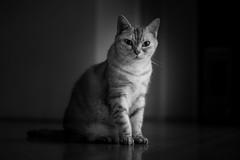 On the floor (h329) Tags: 50mm aposummicronasph f20 floor cat bw leica mmonochrom246