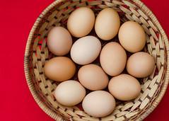 Happy hens gift (#Panama) Tags: chicken huevos eggs pollos hen hens freechicken freecagechickeneggs