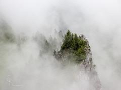 ~ fog symphony ~ (SteffPicture) Tags: mountain berg fog forest schweiz nebel wald schwyz tannen mythen myswitzerland holzegg grossermythen steffpicture