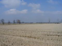 Campi a riposo... (isabru76) Tags: primavera estate riposo cielo azzurro campi coltivati