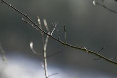 BOKEH (Alexis Breugelmans) Tags: winter snow canon dof bokeh sneeuw tele wit landschap 100400 18135 standaardlens