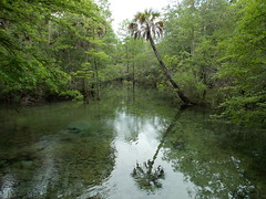 Deep In The Backwoods (alansurfin) Tags: water spring woods florida palm palmtree swamp cypress