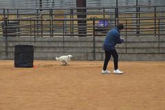 agility266 (jaimekay16) Tags: dog training austin agility k9 xpress nadac k9x