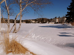 No signs of spring for me (Yolanta Z) Tags: snow laurentians stagathe