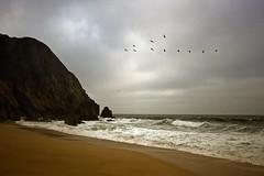 Ocean's Eleven (ellie 6) Tags: ocean seascape pelicans landscape waves themoulinrouge firstquality nowoman