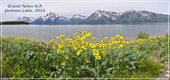 Jackson Lake (DFGPhotography) Tags: grandteton jacksonhole jacksonlake canoneos5dmarkiii