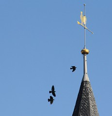 (:Linda:) Tags: bird church germany three town bluesky thuringia spire rooster themar