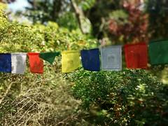 Lung ta (Márcio Vinícius Pinheiro) Tags: bandeira flag buddhism prayerflag budismo ktc windhorse budismotibetano lungta karmatheksumchokhorling cavalodevento jurdar bandeiradeprece