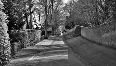 The road through Godmersham (Aliy) Tags: road trees blackandwhite bw wall blackwhite kent village estate hedge georgian boundary oldwall dappledlight quietroad villageroad godmersham boundarywall