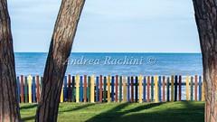 DSC_0009-2 (R4cho92) Tags: sky tree beach fence see coast sand horizon trunk