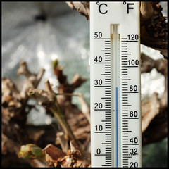 spring | in the greenhouse (foto.phrend) Tags: hot garden square spring leeds greenhouse fujifilm thermometer