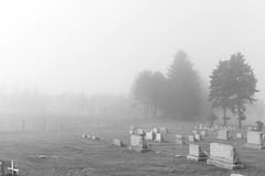 (John Donges) Tags: blackandwhite mist cemetery graveyard pennsylvania headstones addison gravestones 1834