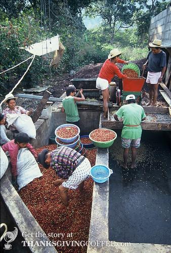 Costa Rican Coffee Farmers Process a New Harvest