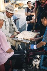 The Life of Leisure (TheLostLens.co.uk) Tags: street old dog man game asian asia play streetphotography korea korean elderly boardgame southkorea rok tongyeong gyeongsangnamdo jungangmarket jungangdong gangguanharbour southgyeongsangprovice