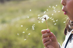 Deseos para Ana (Ines L. Pisano) Tags: blowing dandelion wishes dientedeleon deseos soplando