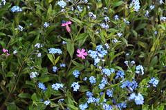 DSC_1141 (PeaTJay) Tags: flowers plants macro nature gardens fauna outdoors reading flora sigma micro closeups berkshire lowerearley nikond750