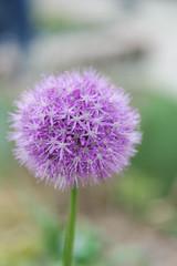 Light (johanssoneva) Tags: light blomma ljus fotosndag fs160522
