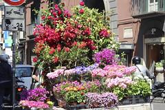 (atrialbyfire) Tags: flowers flower color primavera colors spring colorful colore fiori fiore seller fiorito venditore fioraio