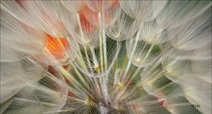 DRIED WILD FLOWERS (M.G.N. - Marcel) Tags: flores colores lineas ramas
